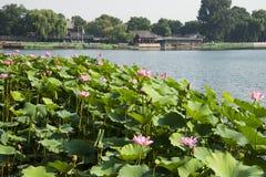 Aziatische Chinees, Peking, Shichahai, de lotusbloemmarkt Stock Foto's