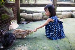 Aziatische Chinese Meisjes die Konijnen voeden stock afbeelding