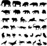 Aziatische dieren Stock Afbeelding