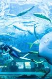 Aziatische familie bekijkende scuba-duiker onderwater in aquarium met pijlstaartrog en andere zeewatervissen royalty-vrije stock afbeelding