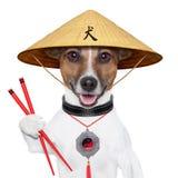 Aziatische hond royalty-vrije stock foto
