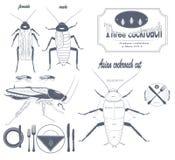 Aziatische kakkerlak Royalty-vrije Stock Foto's