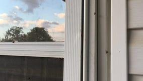 Aziatische Kevers, Dame die Bugs, proberen naar huis binnen te gaan stock videobeelden
