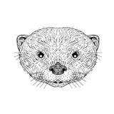 Aziatische klein-Gekrabde Otter Hoofdtekening Royalty-vrije Stock Afbeeldingen