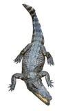 Aziatische krokodil royalty-vrije stock afbeeldingen