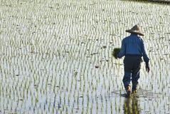 Aziatische landbouwer Royalty-vrije Stock Afbeelding