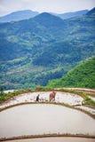 Aziatische landbouwer die aan terrasvormig padieveld werken Stock Fotografie