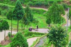 Aziatische landbouwer die aan terrasvormig padieveld werken Stock Foto's