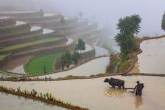 Aziatische landbouwer die aan terrasvormig padieveld werken Royalty-vrije Stock Afbeelding
