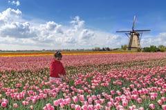Aziatische landbouwer in een tulpenlandbouwbedrijf Royalty-vrije Stock Foto's