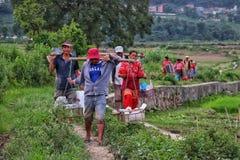 Aziatische landbouwers die huis terugkeren stock afbeelding