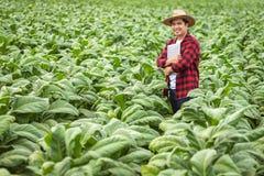 Aziatische landbouwersmens die de kwaliteit van tabakslandbouwbedrijven onderzoeken door landbouwers die moderne landbouwtechnolo royalty-vrije stock foto