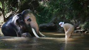Aziatische mahout met olifant in kreek, Chiang-MAI Thailand stock video