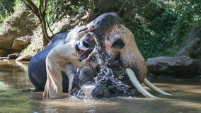 Aziatische mahout met olifant in kreek, Thailand stock videobeelden