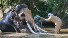 Aziatische mahout met olifant in kreek, Thailand stock video