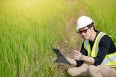 Aziatische mannelijke agronoom die op padieveld waarnemen Royalty-vrije Stock Afbeelding