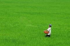 Aziatische mens die aan padiegebied werken in Vietnam stock afbeeldingen