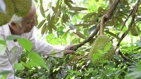 Aziatische mensen en durian boom stock videobeelden