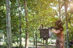 Aziatische mensenimker in oranje beschermingskostuum die een honingraat van een bijenkorf met bijen weggaan die rond in de fruitb Stock Foto's