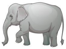 Aziatische olifant Royalty-vrije Stock Afbeeldingen