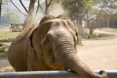 Aziatische olifant Stock Afbeeldingen