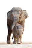 Aziatische olifant die familys loopt Royalty-vrije Stock Afbeeldingen
