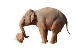 Aziatische olifant die het logboek duwt Royalty-vrije Stock Foto's