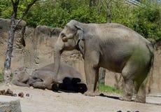 Aziatische Olifant en baby Royalty-vrije Stock Foto