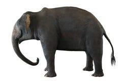 Aziatische olifant op wit royalty-vrije stock fotografie