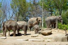 Aziatische Olifanten en baby Royalty-vrije Stock Foto's