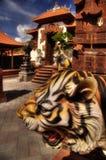 Aziatische tijger Royalty-vrije Stock Foto's