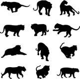 Aziatische tijger en jaguar Stock Afbeelding