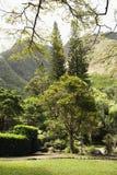 Aziatische tuin in park. Stock Afbeeldingen