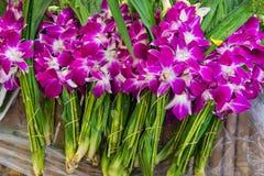 Aziatische violette orchideeën Royalty-vrije Stock Foto's