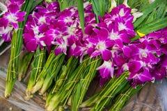 Aziatische violette orchideeën Stock Foto's