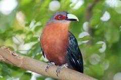 Aziatische vogel bij de dierentuin Royalty-vrije Stock Foto