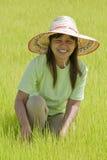 Aziatische vrouw in het padieveld, Thailand Royalty-vrije Stock Afbeeldingen