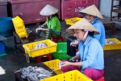 Aziatische vrouwen die in een visserij werken Royalty-vrije Stock Fotografie