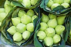 Aziatische witte lotusbloem royalty-vrije stock afbeelding