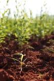 Azienda agricola Fotografie Stock