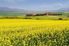 Azienda agricola #2 Fotografie Stock