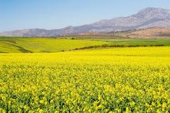 Azienda agricola #2 immagini stock