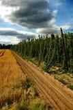 Azienda agricola #24 dei luppoli fotografia stock libera da diritti