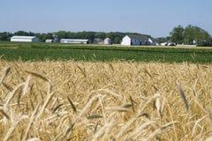 Azienda agricola Immagini Stock