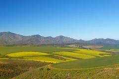 Azienda agricola #6 Fotografia Stock