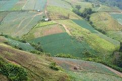 azienda agricola agricola del paese del paesaggio sulla montagna della Tailandia Fotografia Stock Libera da Diritti