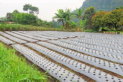 Azienda agricola all'isola tropicale Fotografie Stock Libere da Diritti