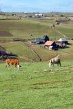 Azienda agricola alpina Immagine Stock Libera da Diritti