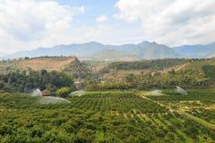 Azienda agricola arancio del giardino nella valle Fotografie Stock Libere da Diritti