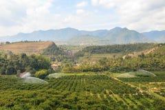 Azienda agricola arancio del giardino nella valle Fotografia Stock